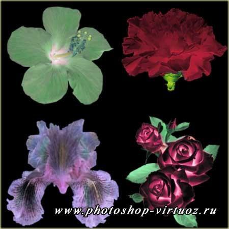 """Кисти """"Цветы 2"""""""